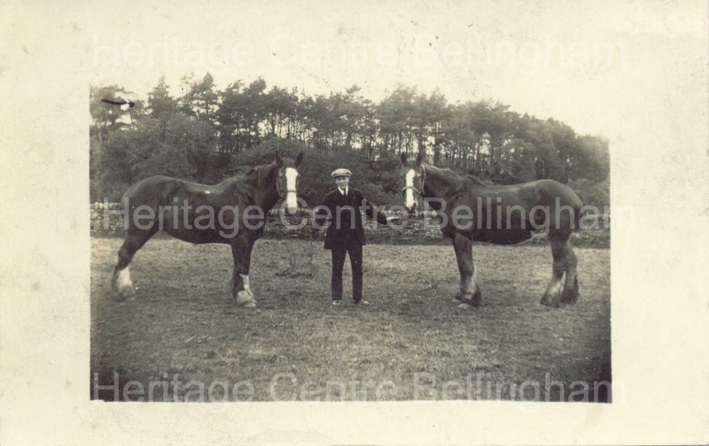 Jack Maughan, carter, with two horses, at Fallow Green